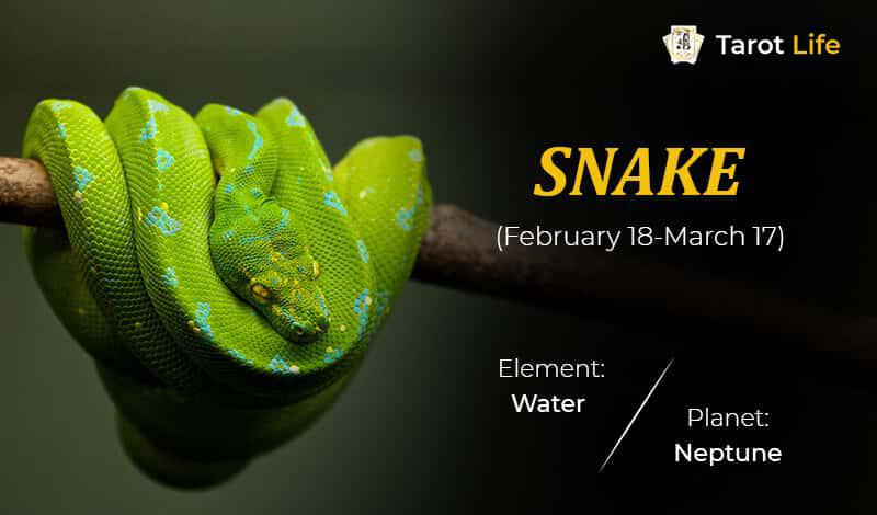 Snake-February 18-March 17