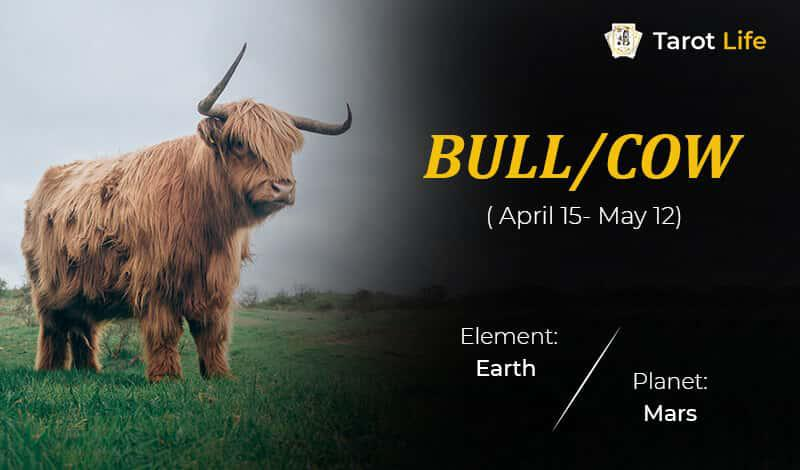 Bull_Cow-April 15- May 12