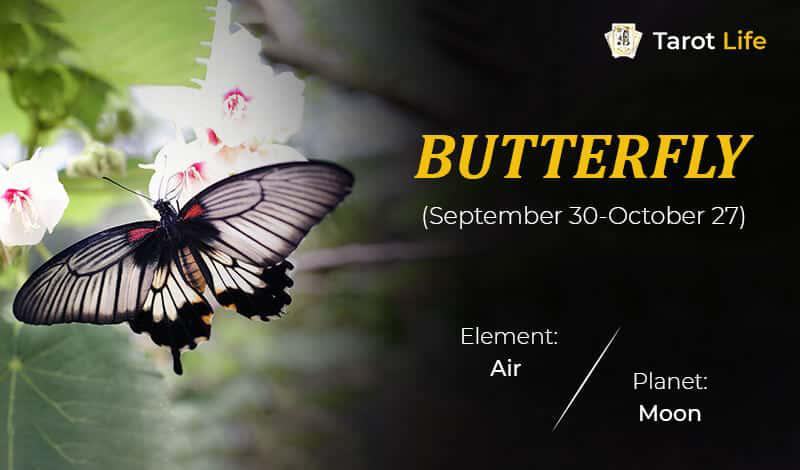 Butterfly-September 30- October 27