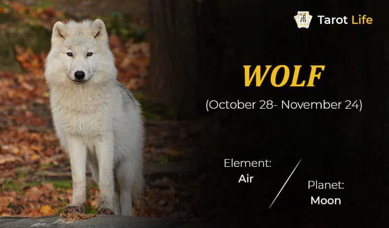 Wolf-October 28- November 24